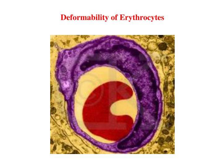Deformability of Erythrocytes