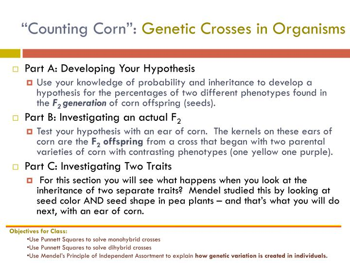 """Counting Corn"":"