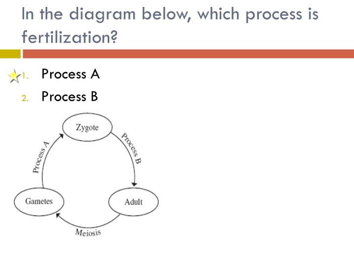 In the diagram below, which process is fertilization?
