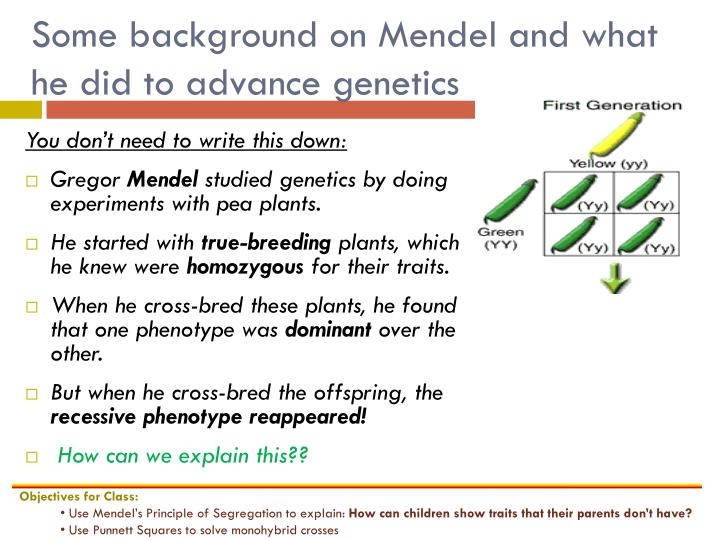 Some background on Mendel and what he did to advance genetics