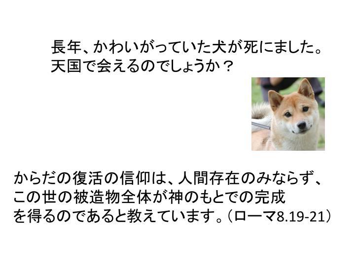 長年、かわいがっていた犬が死にました。
