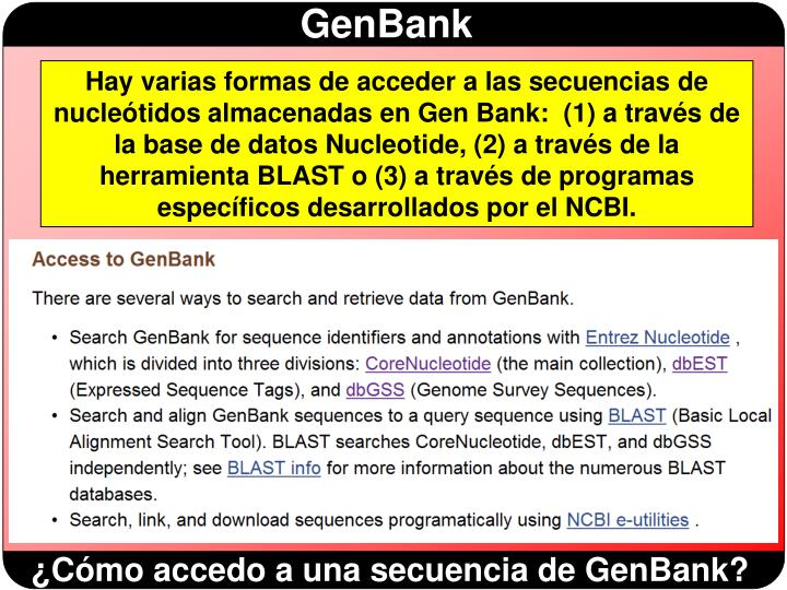 Hay varias formas de acceder a las secuencias de nucleótidos almacenadas en Gen Bank:  (1) a través de la base de datos Nucleotide, (2) a través de la herramienta BLAST o (3) a través de programas específicos desarrollados por el NCBI.