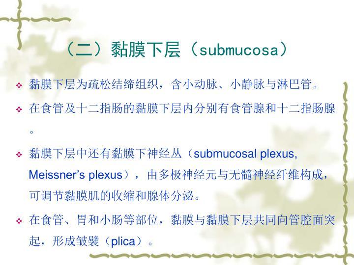 (二)黏膜下层(