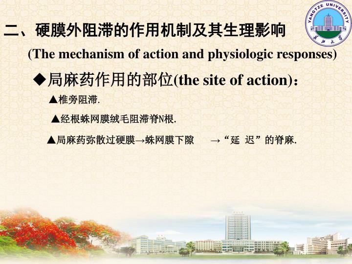 二、硬膜外阻滞的作用机制及其生理影响