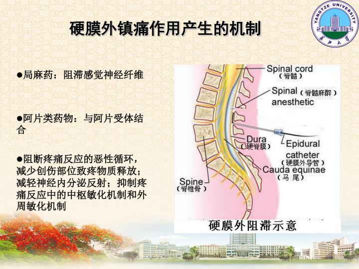 硬膜外镇痛作用产生的机制