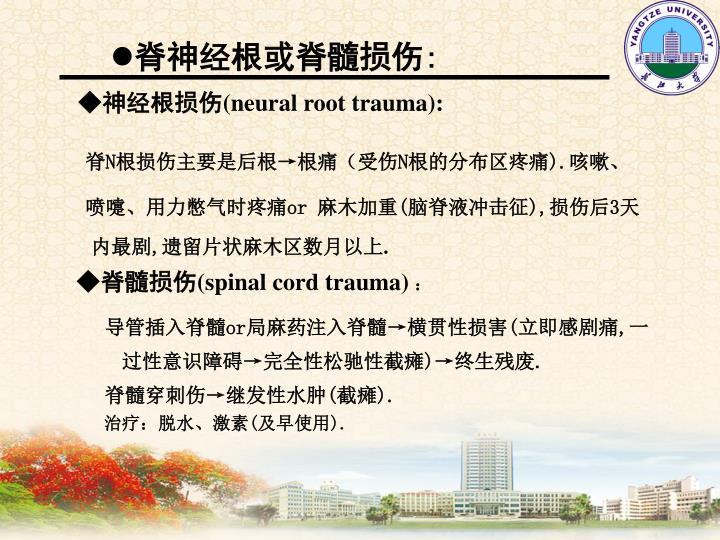 脊神经根或脊髓损伤