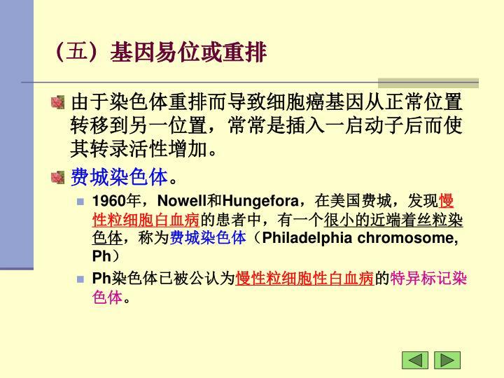 (五)基因易位或重排