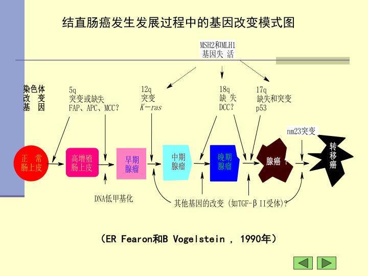 结直肠癌发生发展过程中的基因改变模式图