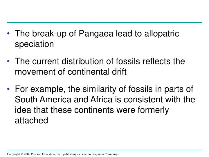The break-up of Pangaea lead to allopatric speciation