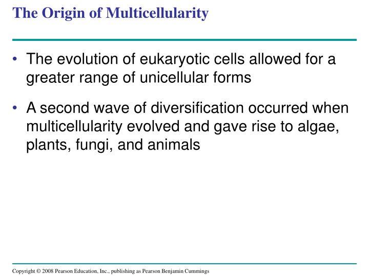 The Origin of Multicellularity