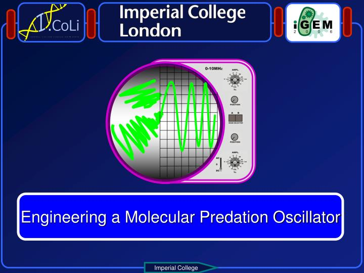 Engineering a Molecular Predation Oscillator