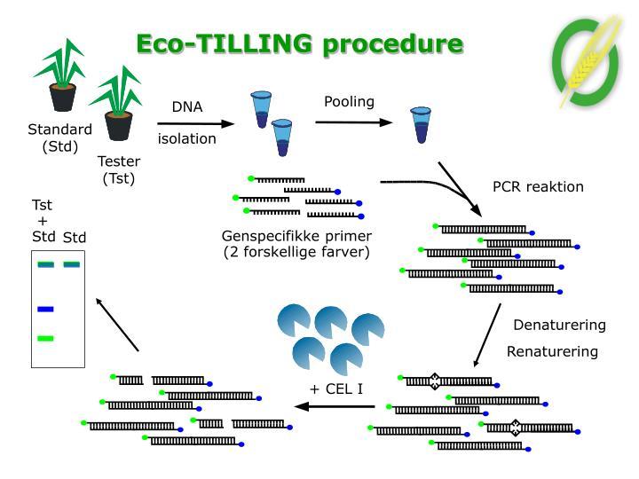 Genspecifikke primer