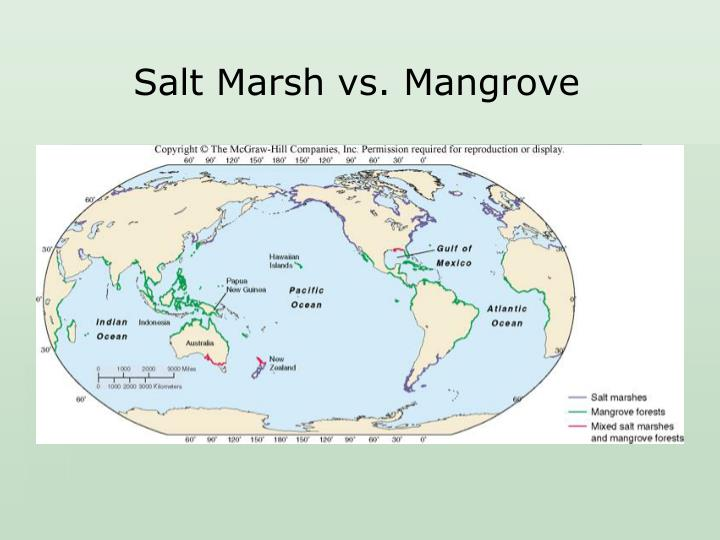 Salt Marsh vs. Mangrove
