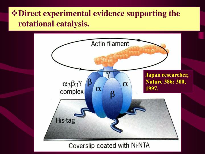 Direct experimental evidence supporting the rotational catalysis.