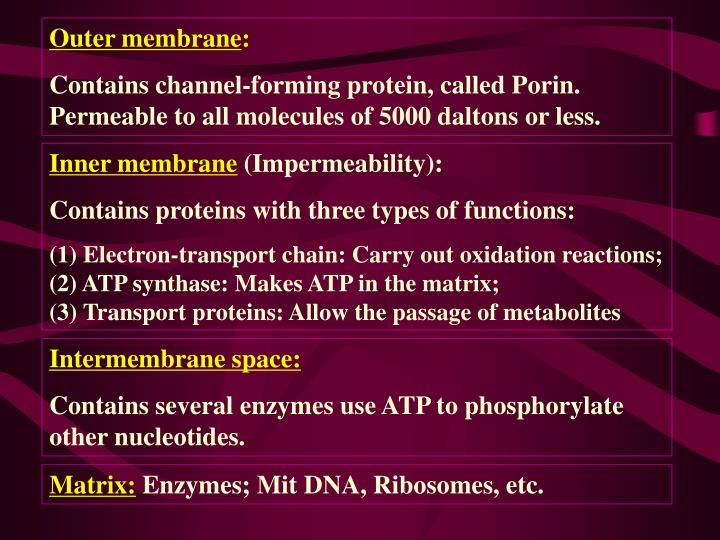 Outer membrane