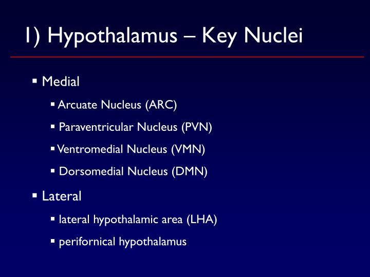 1) Hypothalamus – Key Nuclei