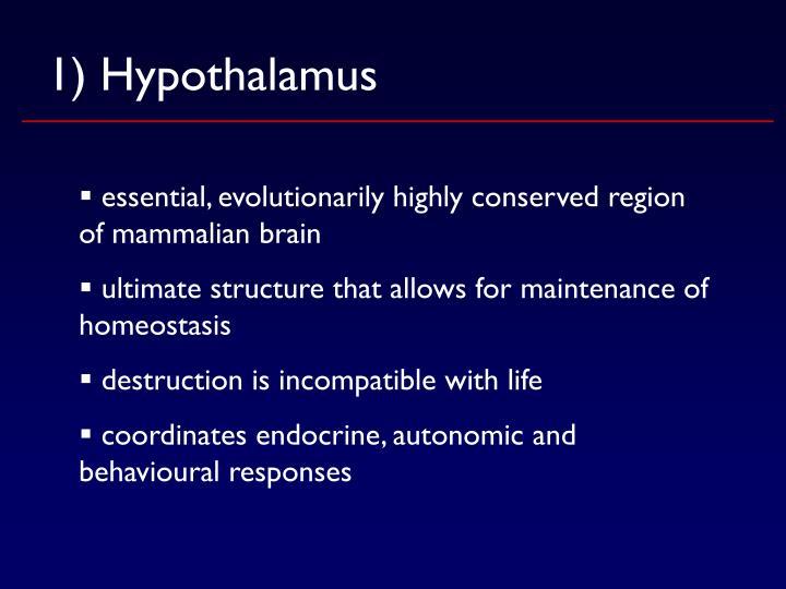 1) Hypothalamus