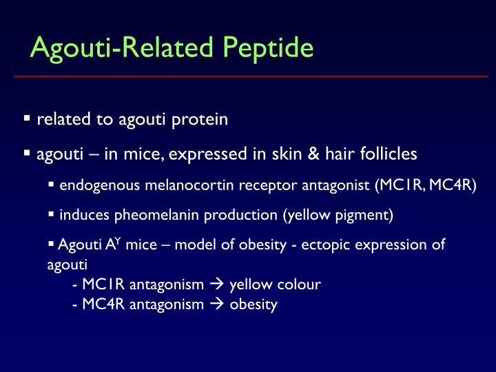 Agouti-Related Peptide