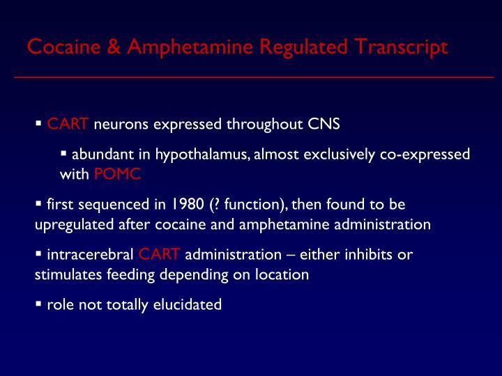 Cocaine & Amphetamine Regulated Transcript