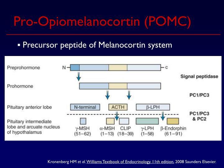 Pro-Opiomelanocortin (POMC)