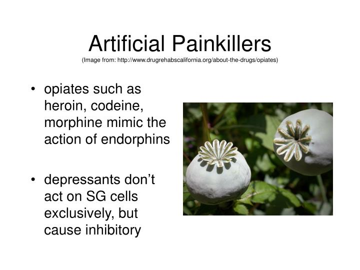 Artificial Painkillers