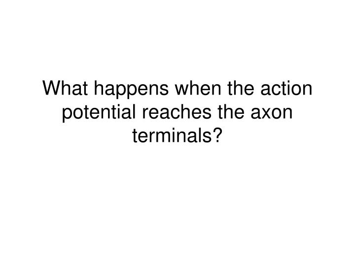 What happens when the action potential reaches the axon terminals?