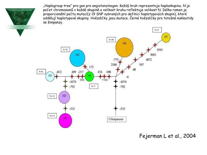 """Haplogroup tree"" pro gen pro angiotenzinogen. Každý kruh reprezentuje haploskupinu."