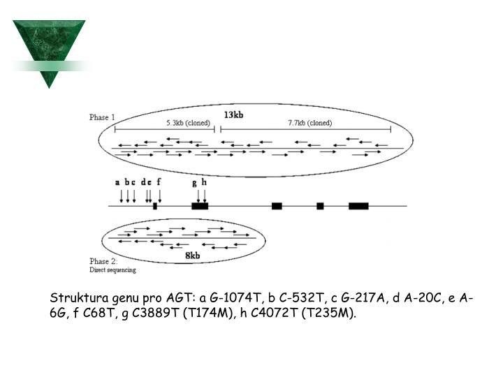 Struktura genu pro AGT: a G-1074T, b C-532T, c G-217A, d A-20C, e A-6G, f C68T, g C3889T (T174M), h C4072T (T235M).