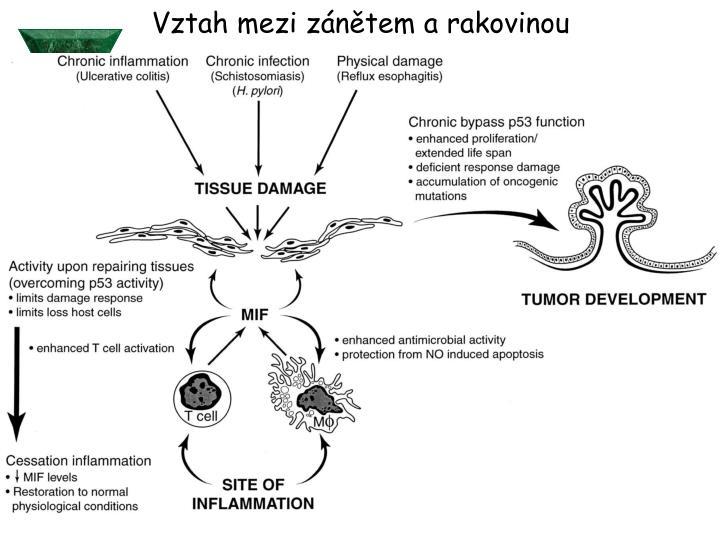 Vztah mezi zánětem a rakovinou