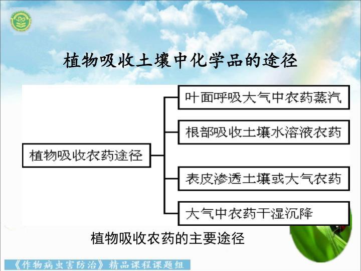 植物吸收农药的主要途径