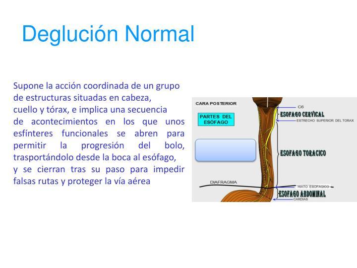 Deglución Normal
