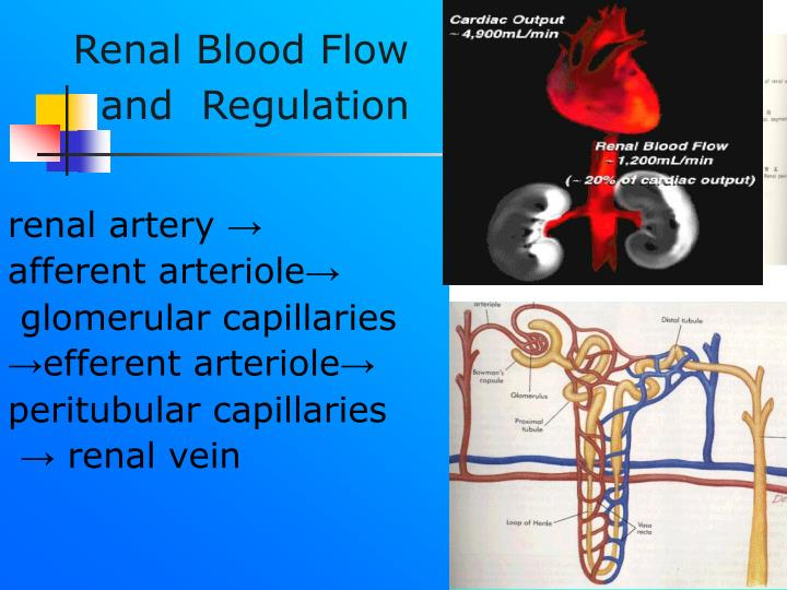 Renal Blood Flow