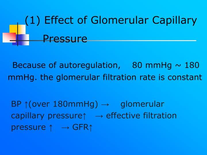 (1) Effect of Glomerular Capillary