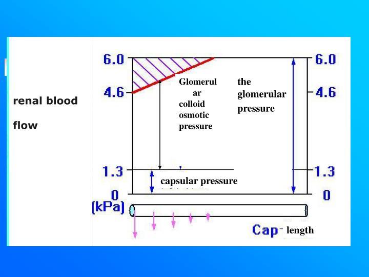 renal blood