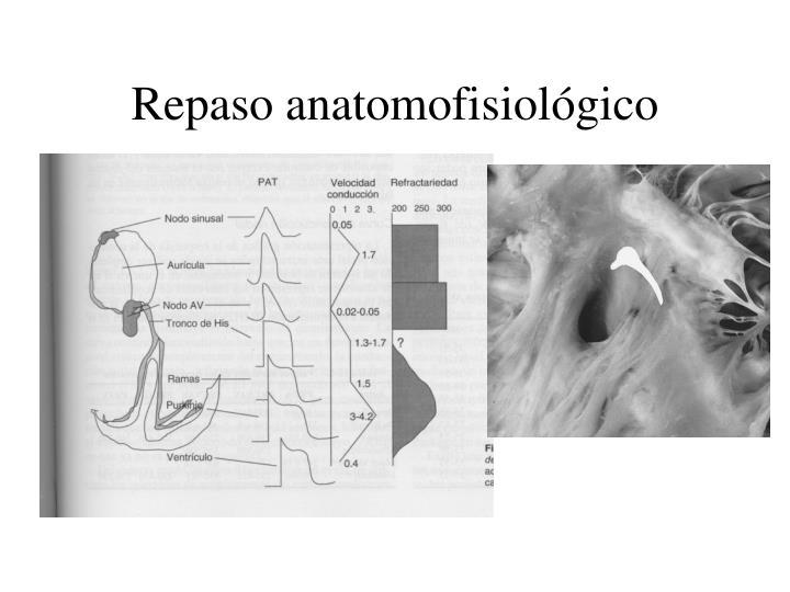 Repaso anatomofisiológico