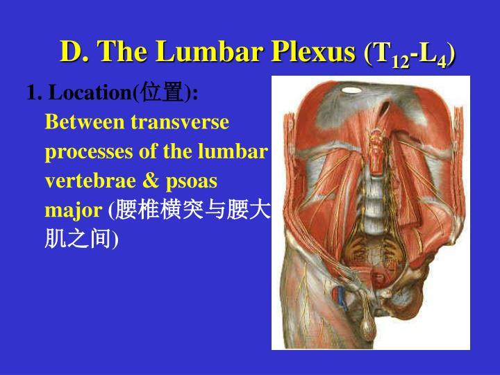 D. The Lumbar Plexus