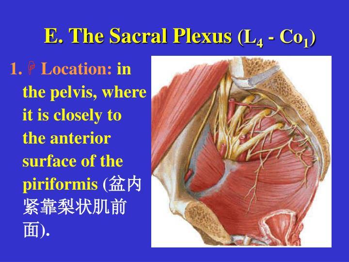 E. The Sacral Plexus