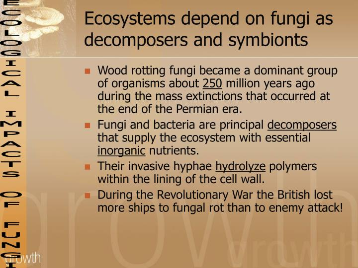 Ecosystems depend on fungi as decomposers and symbionts
