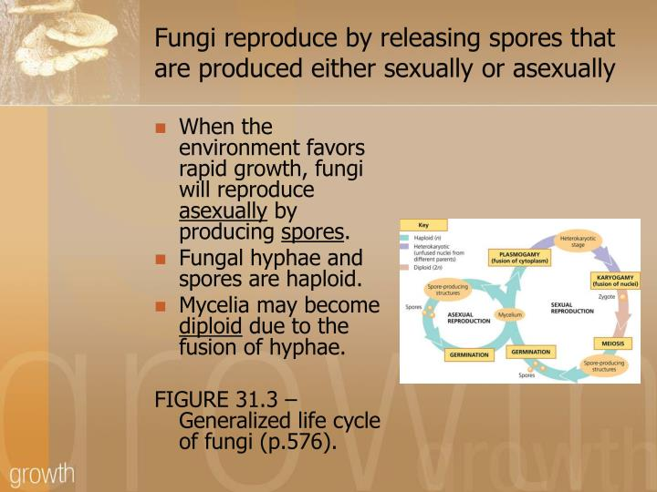 Fungi reproduce by releasing spores that are produced either sexually or asexually
