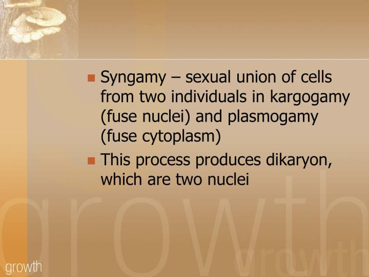 Syngamy – sexual union of cells from two individuals in kargogamy (fuse nuclei) and plasmogamy (fuse cytoplasm)