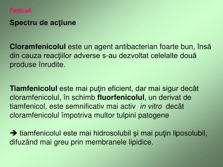 Fenicoli