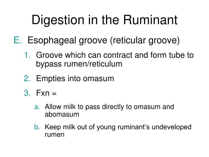 Digestion in the Ruminant
