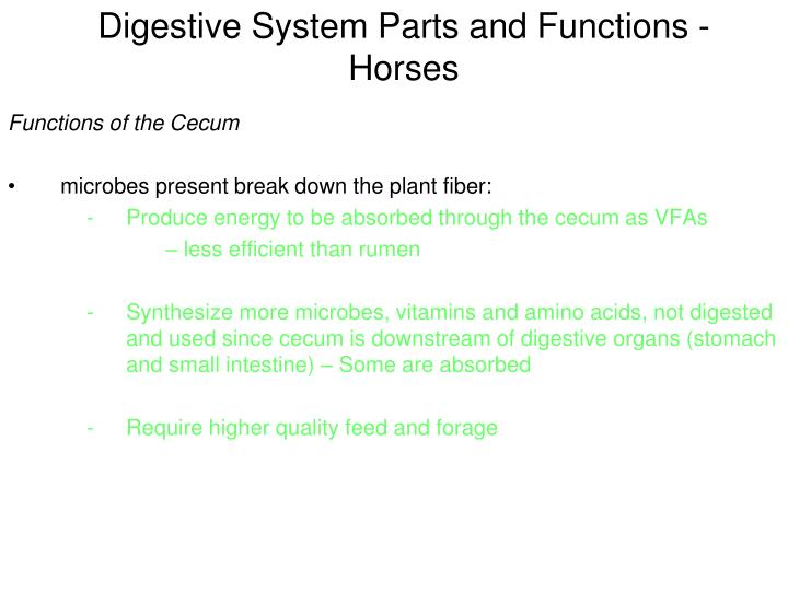 Digestive System Parts and Functions - Horses
