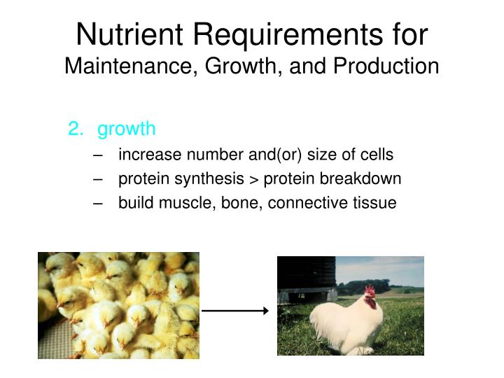Nutrient Requirements for