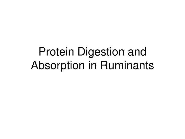 Protein Digestion and Absorption in Ruminants