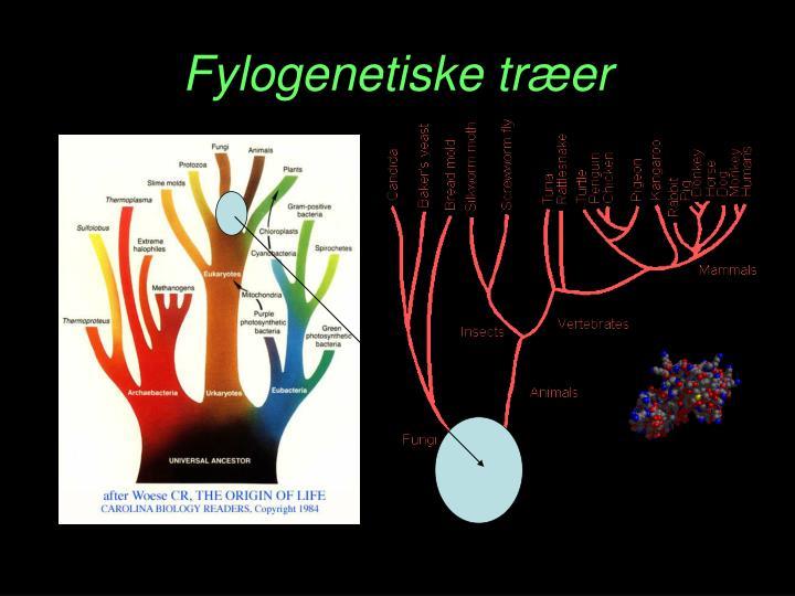 Fylogenetiske træer