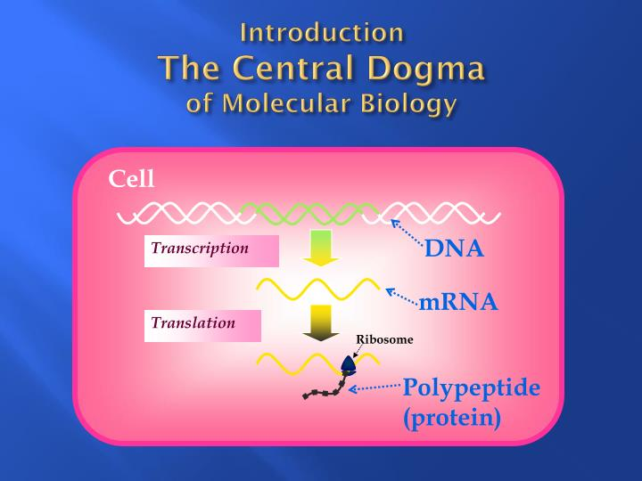 Introduction the central dogma of molecular biology