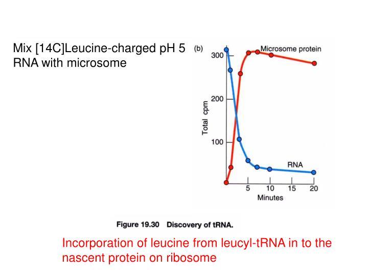 Mix [14C]Leucine-charged pH 5