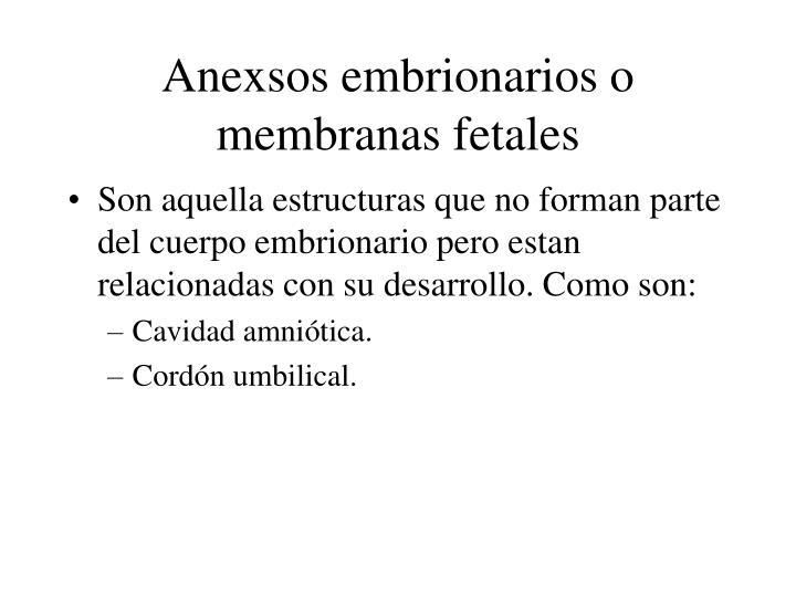 Anexsos embrionarios o membranas fetales