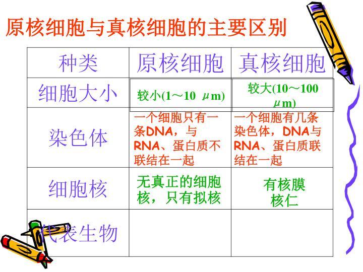 原核细胞与真核细胞的主要区别